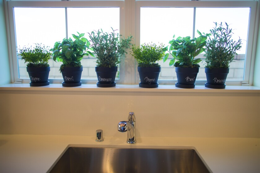 Herbs grow best in a south-facing window.