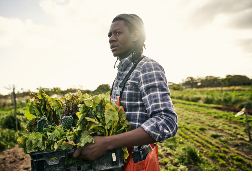 Shot of a young man holding a crate of freshly picked produce on a farm
