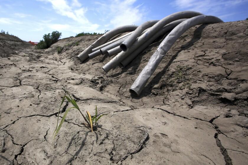 En esta imagen del 18 de mayo de 2015, líneas de irrigación a lo largo de un canal seco en un campo de cultivo de Gino Celli, quien depende de los derechos de antiguedad al agua para regar sus cultivos cerca de Stockton, California. Una nueva investigación publicada el miércoles 5 de octubre de 2016, encontró que el incremento a las temperaturas generarán de gran forma el riesgo de mega sequías en la región suroeste de Estados Unidos. Las rachas de sequía, que han durado hasta dos décadas, han azotado previamente al Suroeste, pero los científicos indican que las mega sequías futuras serían más calientes y severas, lo que perjudicaría los recursos del agua. (AP Foto/Rich Pedroncelli, Archivo)