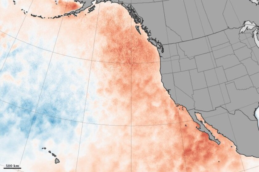 This illustration from NASA shows areas (in red) where the ocean has been unusually warm.