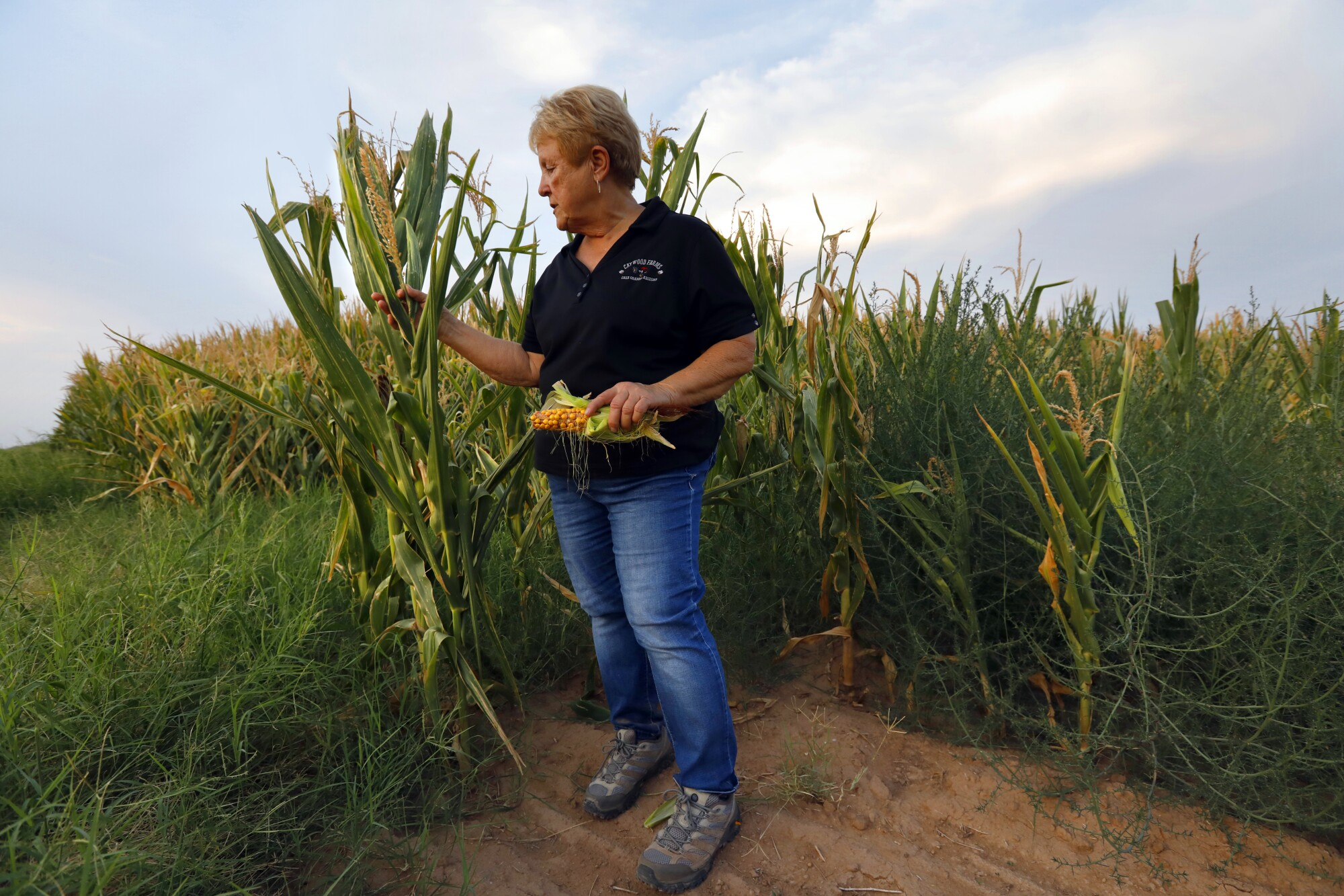 Nancy Caywood stands beside corn that her son farms.