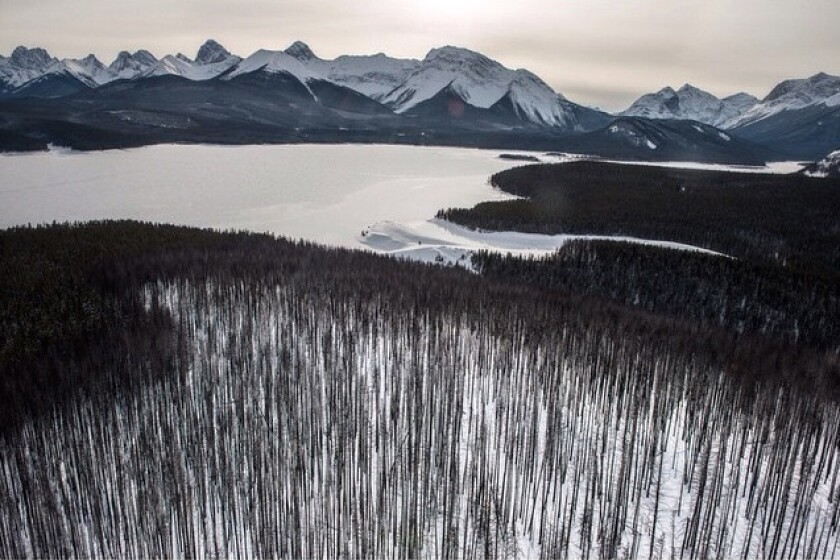 Burned forest, frozen lake & the Canadian Rockies