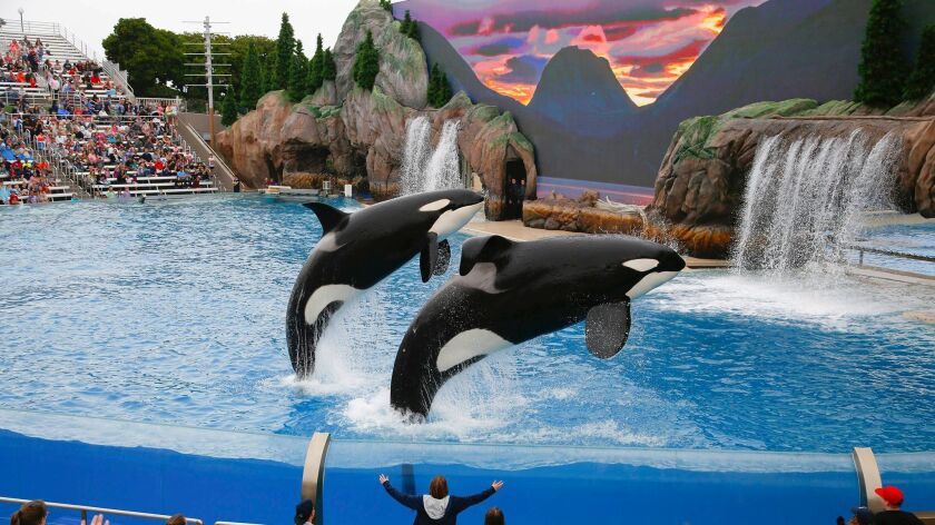 File photo of SeaWorld San Diego Orca Encounter
