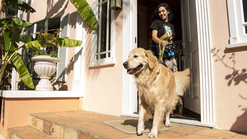 SoftBank sells its stake in Wag back to the dog-walking start-up