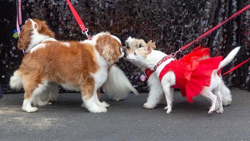 The San Diego Humane Society fur Ball gala fundraiser