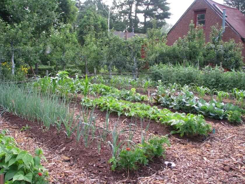 Gardening Veggies 101