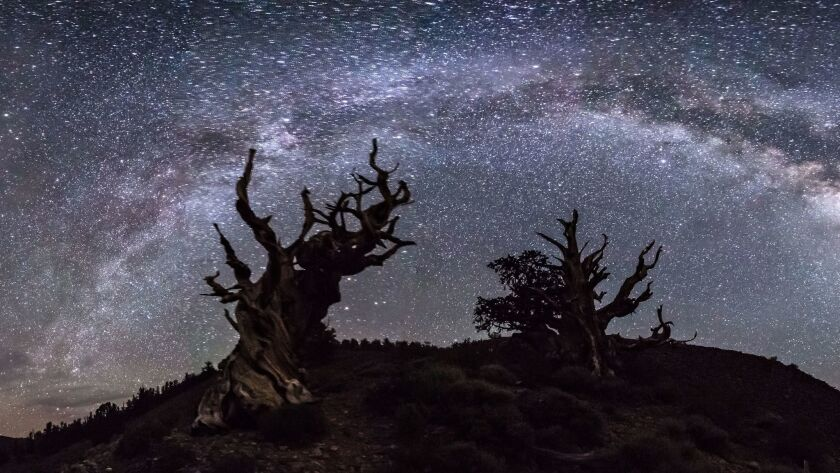 The Ancient Bristlecone Pine Forest is high in the White Mountains in Inyo County.