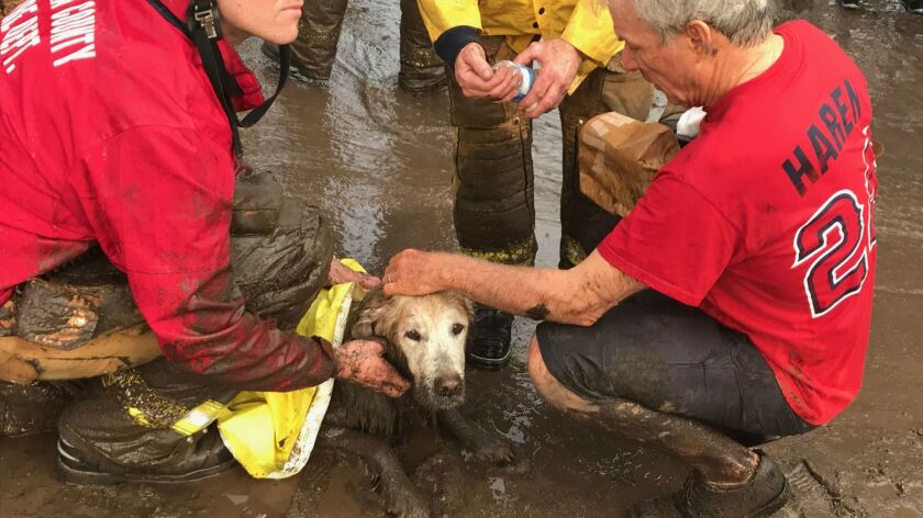 Montecito resident Dana Fisher tends to his dog Maverick after the animal got stuck in the mud at th