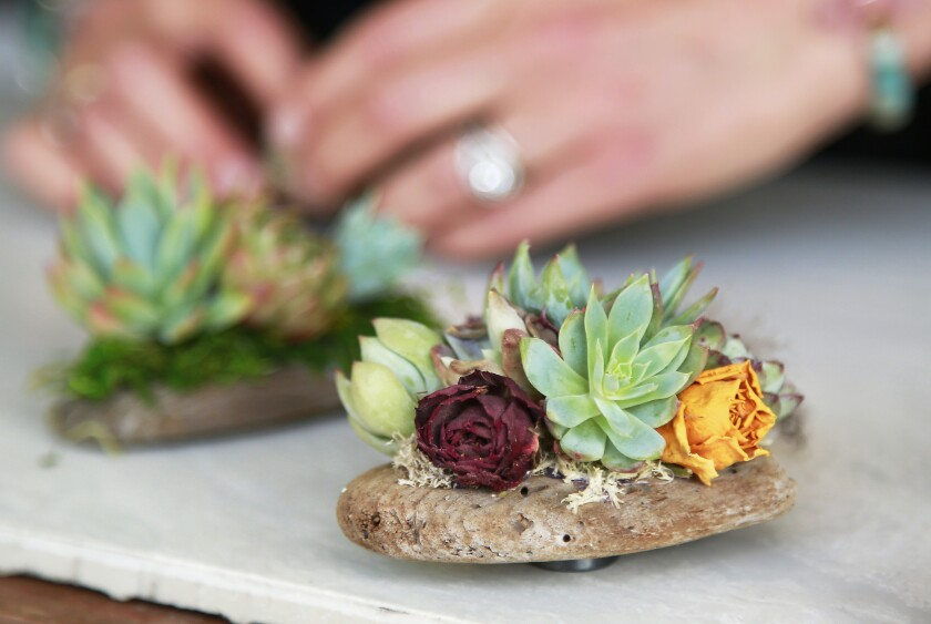A miniature succulent arrangement created by Cohen in her backyard workshop.