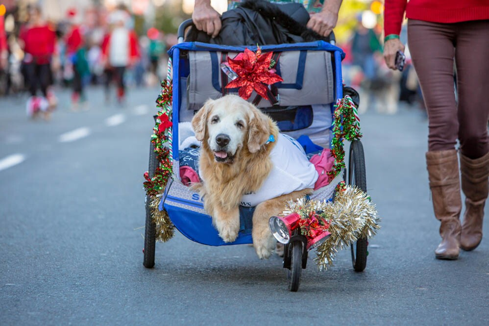Furry friends starred in the San Diego Union-Tribune Gaslamp Holiday Pet Parade on Sunday, Dec. 11, 2016. (Bradley Schweit)
