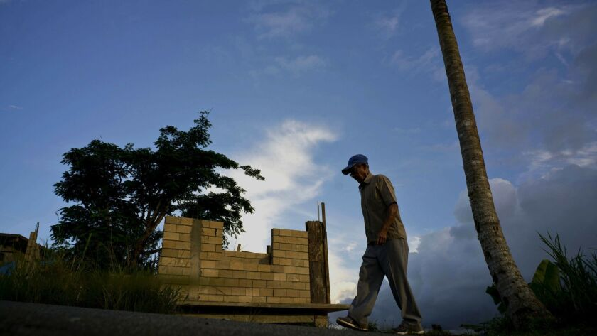 FILE - In this Sept. 8, 2018, file photo, Ramon Alicea Burgos walks past his palm tree, with its top