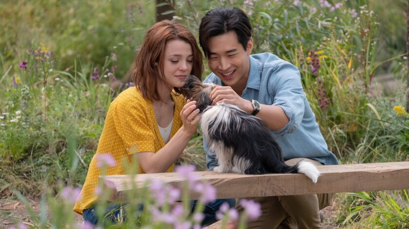 "Kathryn Prescott and K-pop star Henry Lau with a Yorkshire terrier in ""A Dog's Journey."""