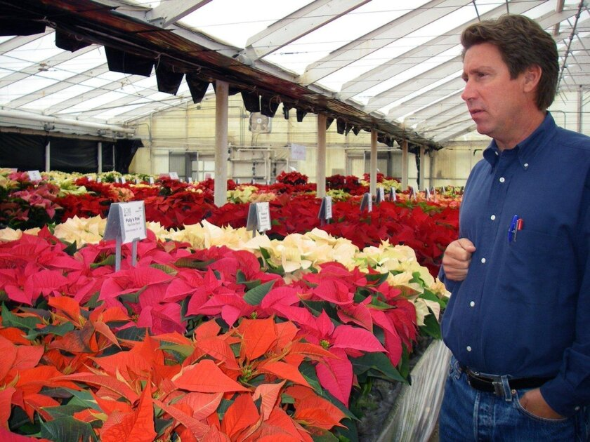 Paul Ecke III in the greenhouse.