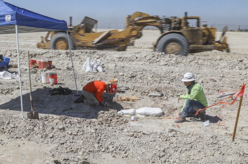 Fossils found during construction of State Route 11 in Otay Mesa.