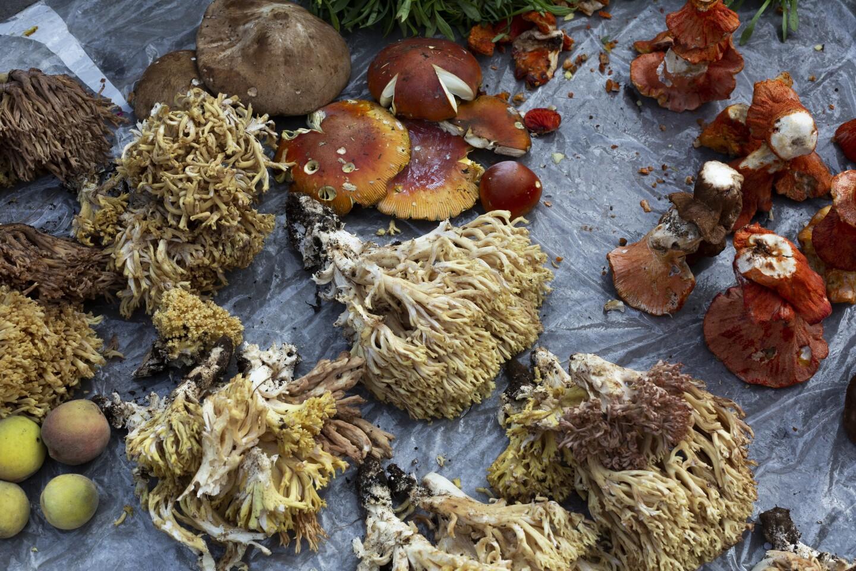 la-fo-mushroom-harvesting-Cheran-015.JPG