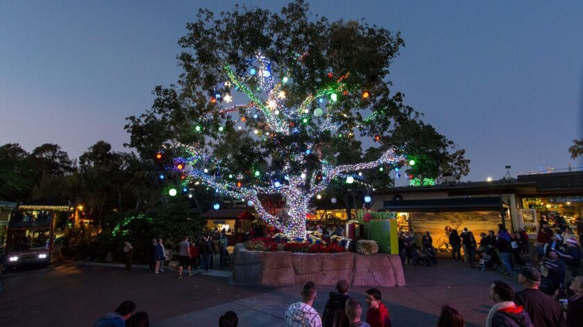Hundreds of colored lights decorate the tooga tree in the front plaza during Jungle Bells at the San Diego Zoo.