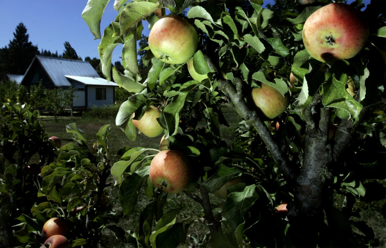 Philo Apple Farm Cooking School