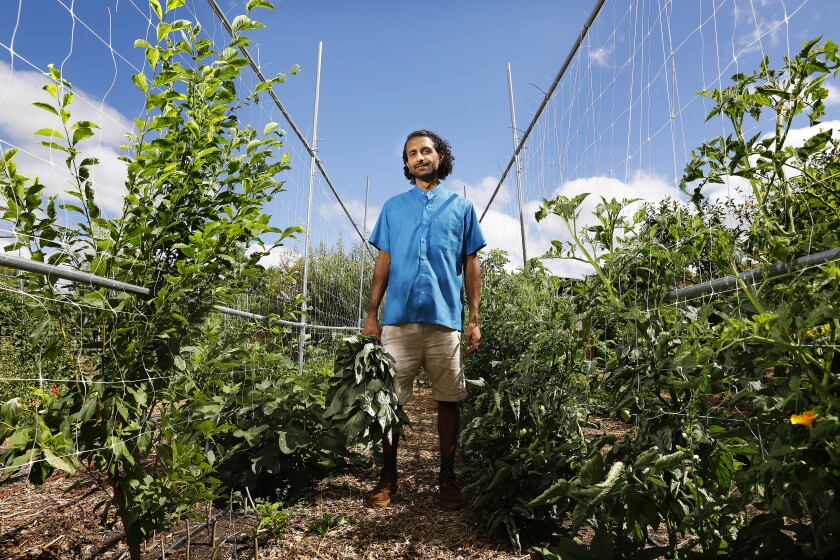 Rishi Kumar stands among the plants at his farm in Pomona.