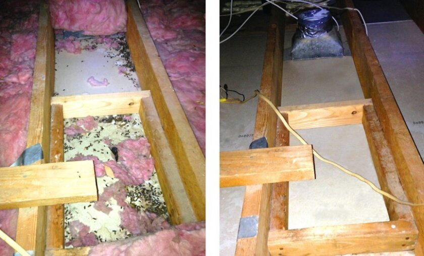 Before-and-after attic cleanup and pest-access removal by Attic Construction