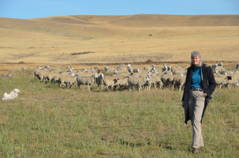 Jill Swannack, eastern Washington sheep farmer and veterinarian