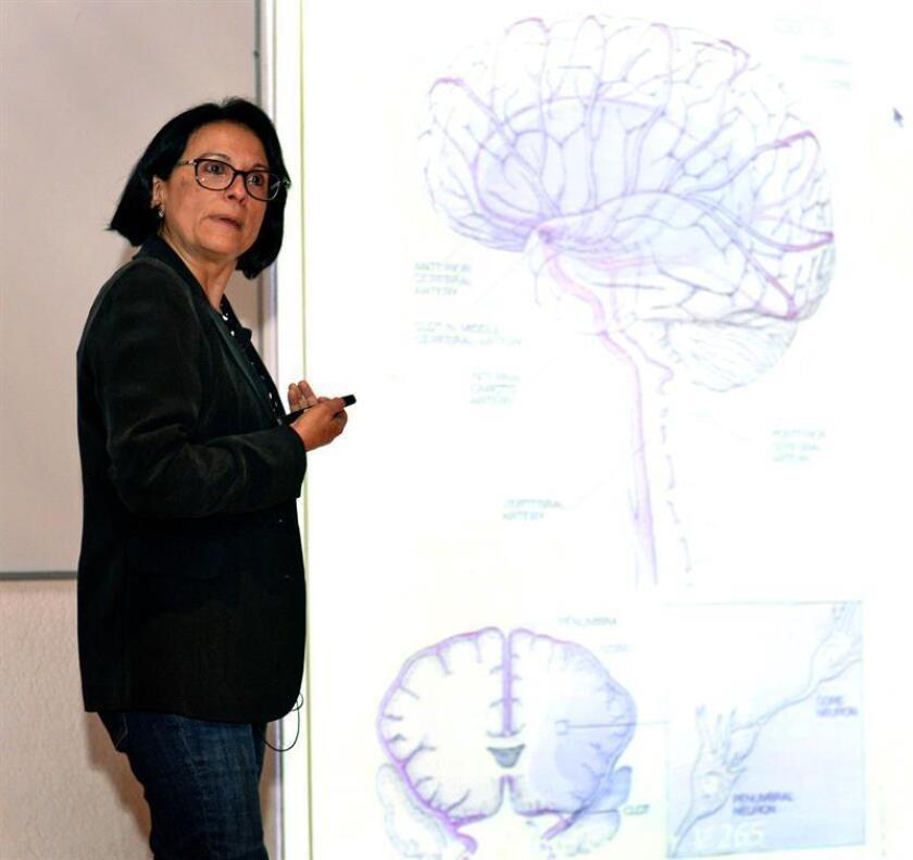Fotografía cedida hoy, viernes 20 de abril de 2018, que muestra a la investigadora Lourdes Massieu Trigo en Ciudad de México (México). La glucosa es esencial para que el cerebro funcione de forma adecuada y lo mejor es obtenerla de manera natural a través de una alimentación equilibrada, dijo hoy una especialista de la Universidad Nacional Autónoma de México (UNAM). EFE/ UNAM/SOLO USO EDITORIAL / NO VENTAS