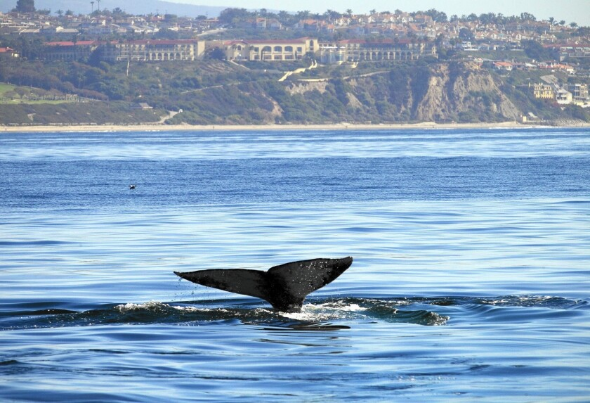 la-1773031-me-whale-watching-competition-10-ajs-j-20160209