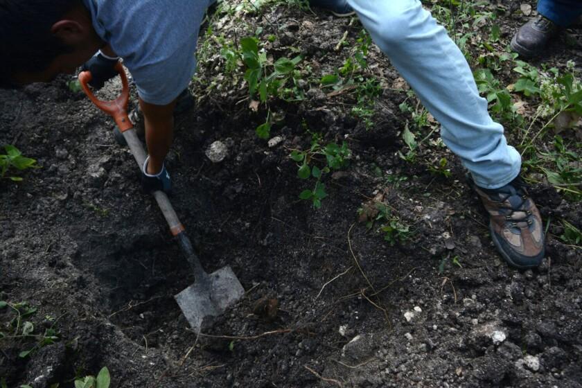 Habitantes del sector excavan en los alrededores del lugar donde la fiscalía mexicana confirmó el hallazgo de cadáveres en dos fosas, en Carrizalillo (México).