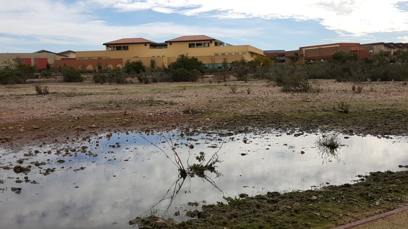 Vernal pools, temporary ecosystems that appear after rains, are protected at Miramar College with a new fenced-in trail system