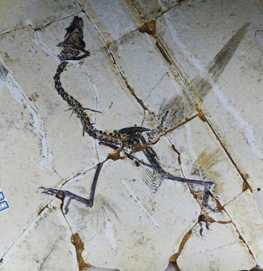 Ancient feathered birds may have sported four wings, study says