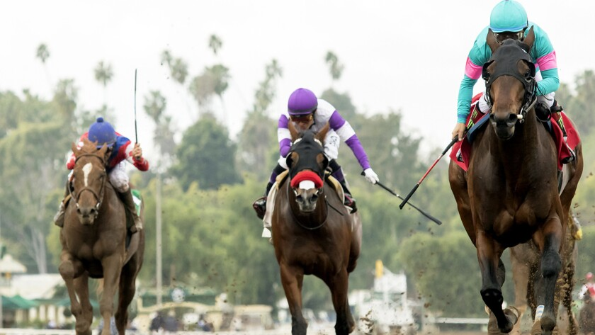 Royal Mo, with Victor Espinoza aboard, races to victory along the inside during the Robert B. Lewis Stakes on Feb. 4 at Santa Anita.