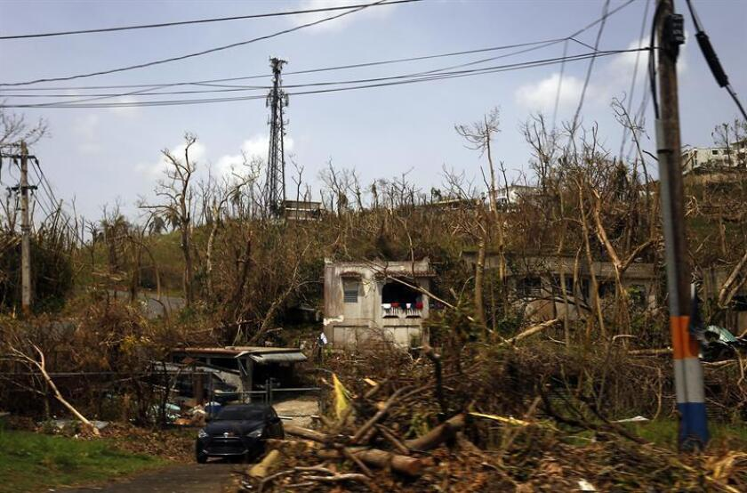 Detalle de los daños en un poste del tendido eléctrico y la vegetación afectados por el paso del huracán María, en la localidad de Aguas Buenas, Puerto Rico. EFE/Archivo