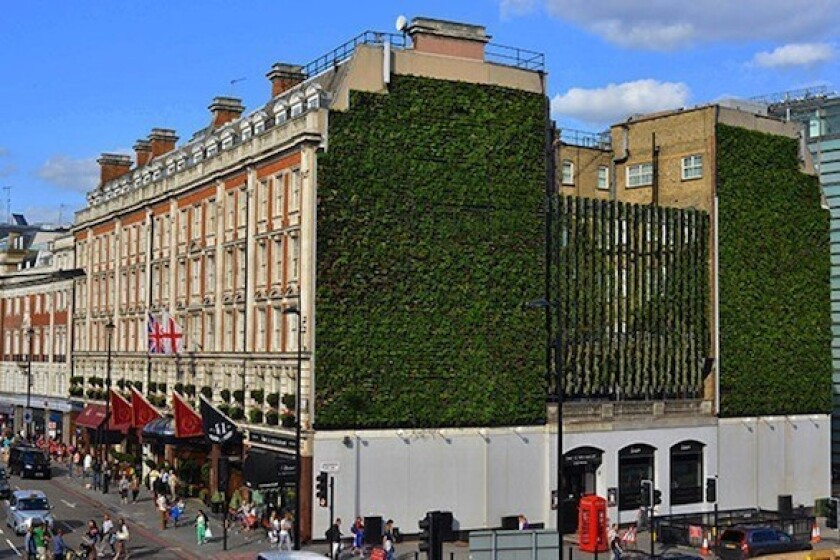London: Hotels' 'living wall' is a garden that grows up, up and up