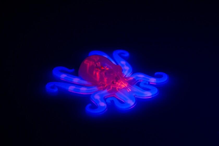 Esta imagen provista por Ryan Truby, Michael Wehner y Lori Sanders, de la Universidad de Harvard, muestra el Octobot, un robot autónomo completamente suave que es el primero de su tipo en el mundo. El Octobot es como un pequeño pulpo y está diseñado para imitar a esa criatura resbalosa para meterse entre rajaduras y en lugares estrechos, lo que le hace ideal para situaciones de rescate. (Ryan Truby, Michael Wehner y Lori Sanders, Universidad de Harvard via AP)