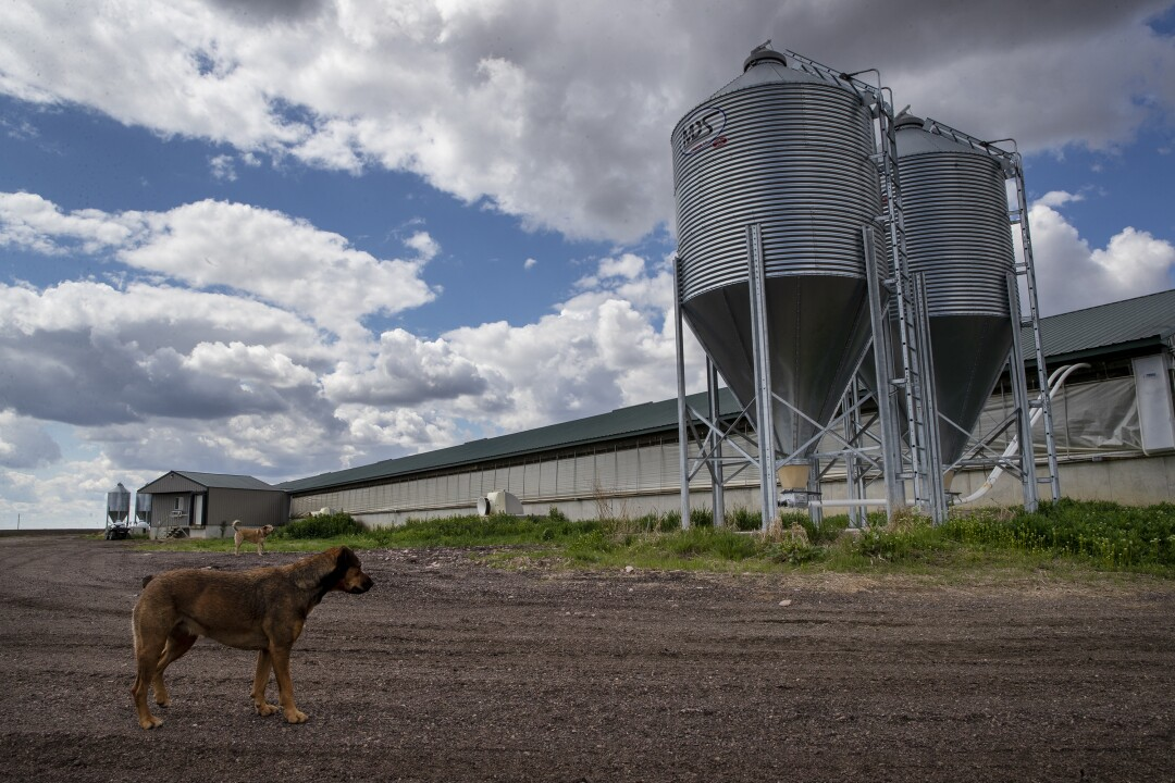 Craig Anderson's farm in Centerville, S.D., has trouble finding factories to take his hogs.