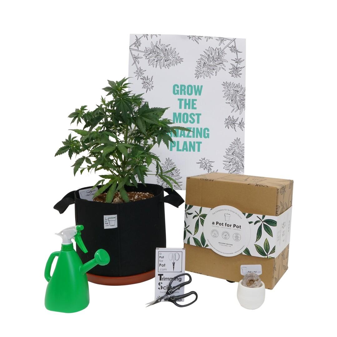 At home pot-growing kit