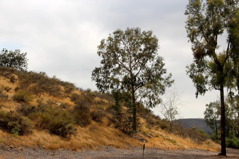 A 2016 photo of a berm near where Barton Mound once stood.
