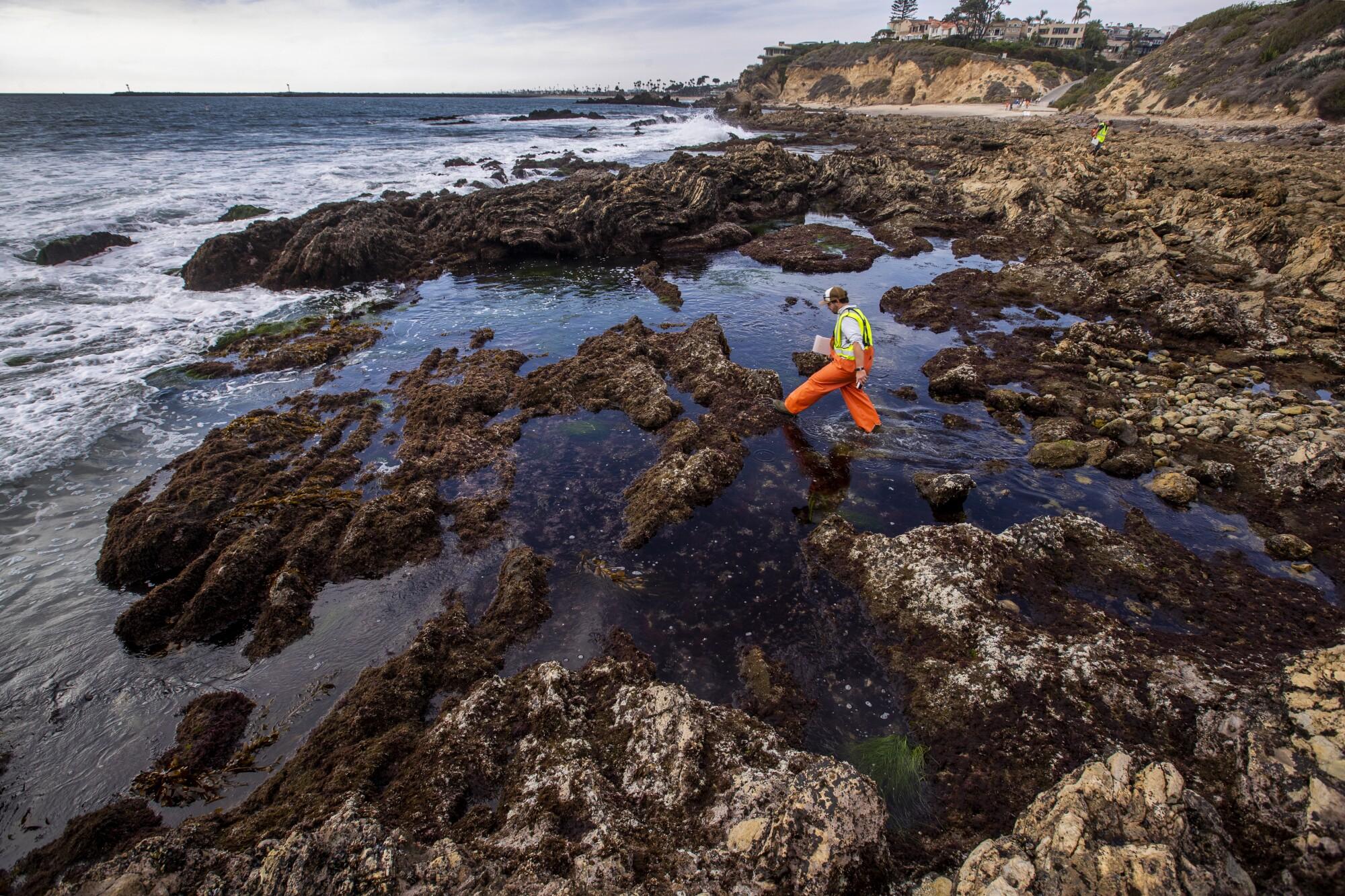 Biologists from  UC Santa Cruz and Tenera Consulting  assess Little Corona del Mar tide pools