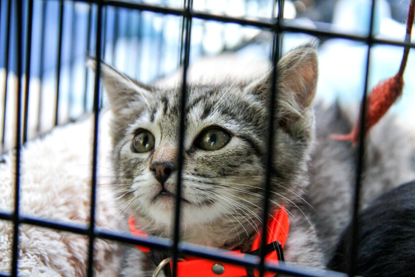 Irvine's Super Pet Adoption event will feature more than 150 adoptable pets.