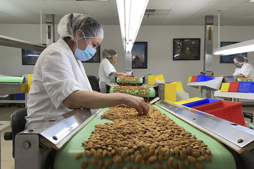 Employees inspect almonds in the processing facility at Steward & Jasper Orchards in Newman, Calif. on July 20, 2021. California's deepening drought threatens its $6 billion almond industry, which produces about 80 percent of the world's almonds. As water becomes scarce and expensive, some growers have stopped irrigating their orchards and plan to tear them out years earlier than planned. (AP Photo/Terry Chea)