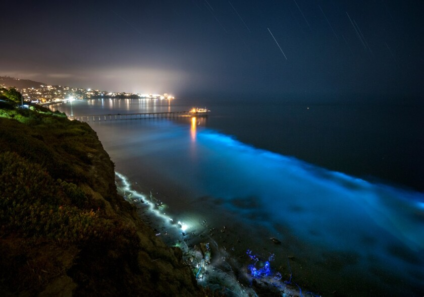A plankton bloom produce bioluminescent light in La Jolla in spring 2020.