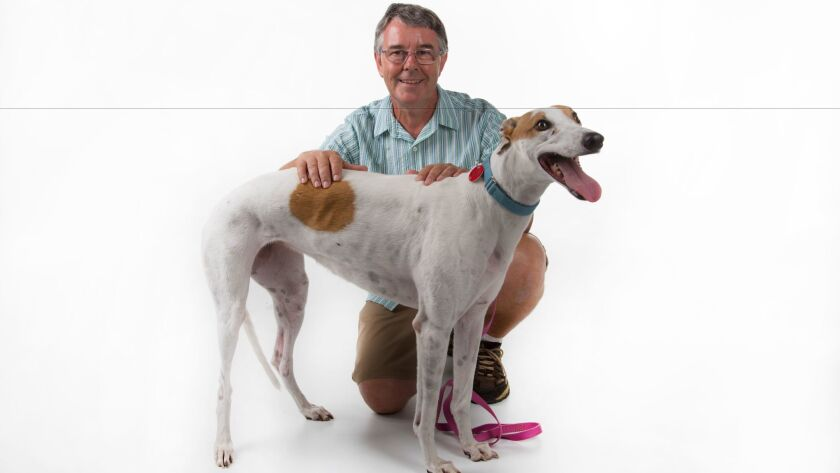 Darren Rigg, with 26-month old Greyhound rescue, Ebay.