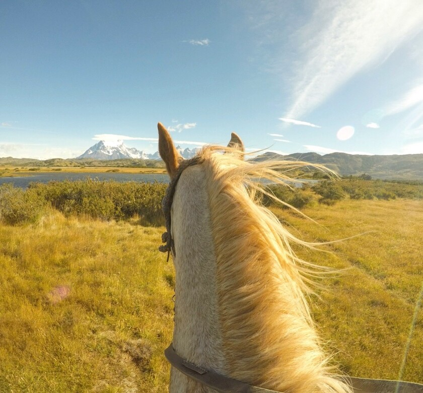 A horse looks across a field at a snow-capped mountain.