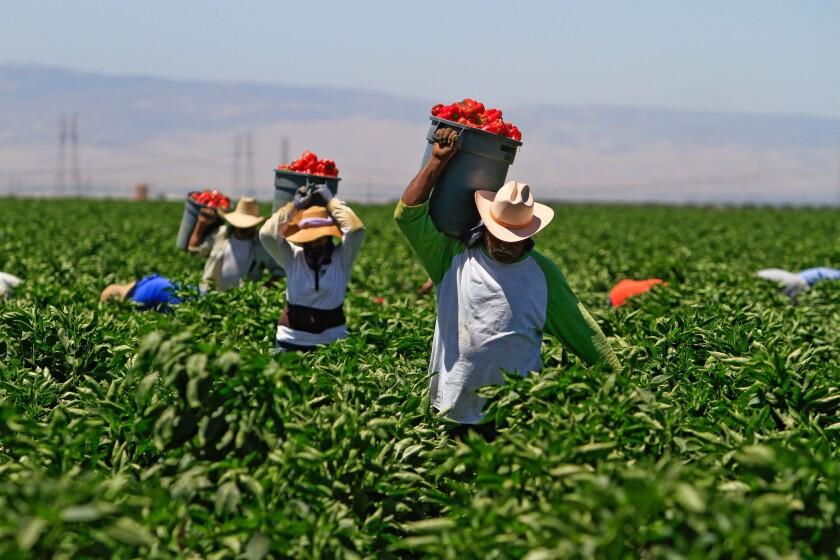 Bakersfield farmworkers