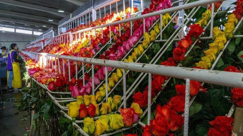 Fotografía sin fecha cedida hoy por UPS donde aparecen unos empleados mientras procesan flores. EFE/Cortesía UPS/SOLO USO EDITORIAL/NO VENTAS