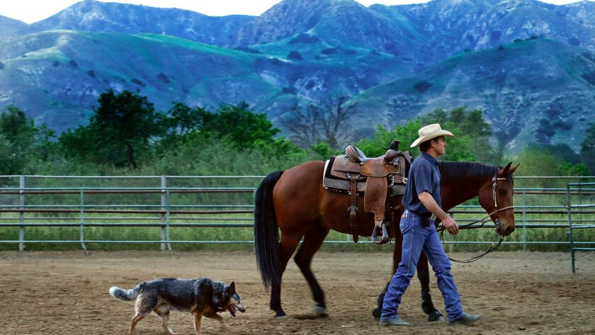 """Dale Gibson walks with his quarter horse, """"Shooter,"""" and Australian Cattle Dog Luke, inside the arena at his ranch located near Hansen Dam in Sunland. The bullet train will come very close to the ranch that also has 90 horses on it and Gibson is opposed to it's proximity because of the impact the noise will have on his livestock."""