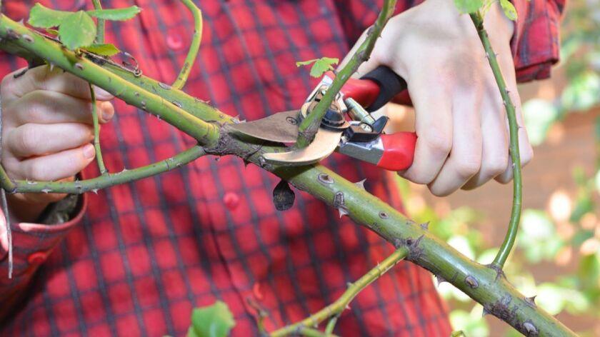 Gardening On The Cutting Edge Pomerado News