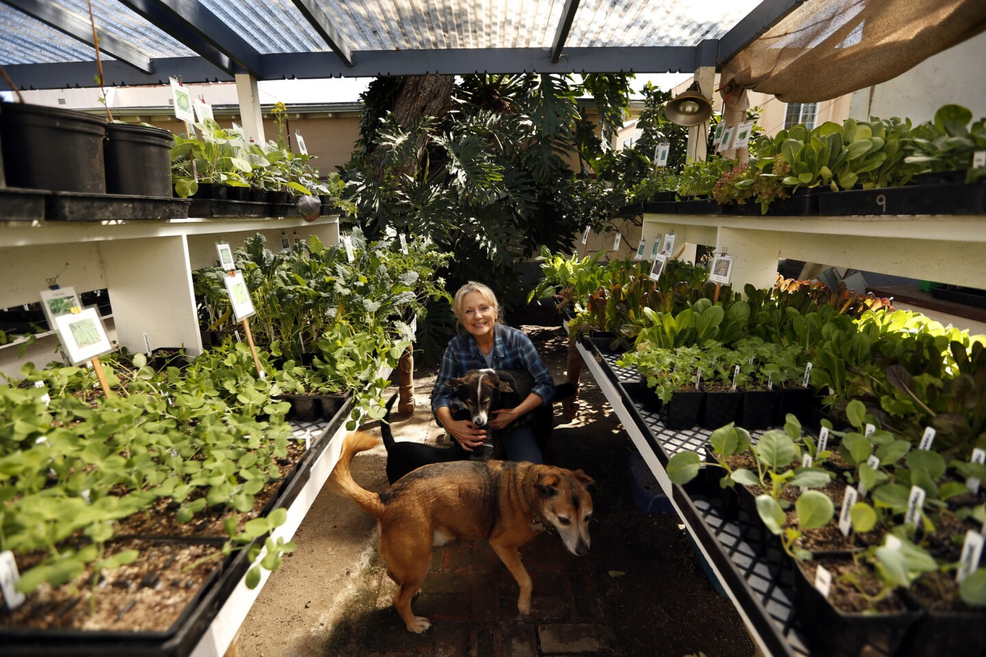 Jo Anne Trigo, co-owner of Two Dog Organic Nursery, rests in the middle of rows of tomato plants with her dogs Lalo, foreground, Jake and Charlie in back of her home.