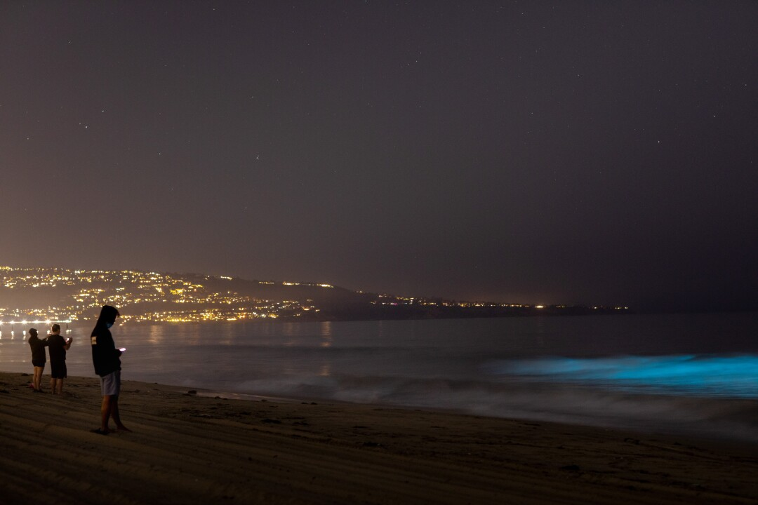 Bioluminescent waves glow off the coast of Hermosa Beach
