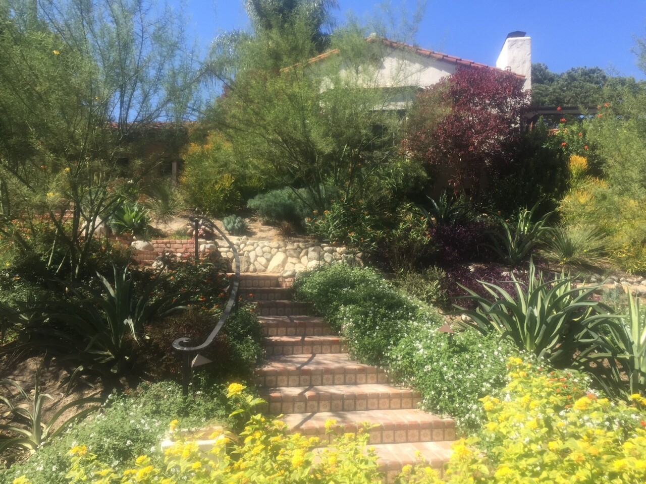 Amber Denker's Toluca Lake garden today is a hub for neighbors and wildlife. It features a new, inviting path to the 1924 Spanish home, where actor Gabby Hayes once lived.