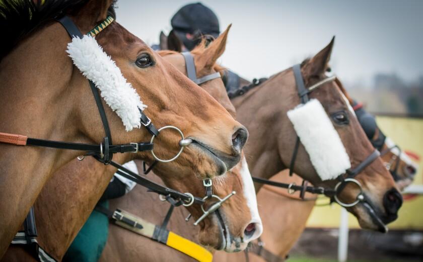 Horses prepare to race.